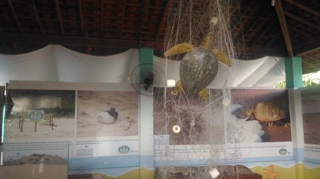 Imagens do momento do nascimento e exemplo de como as tartarugas são capturadas em redes de pesca