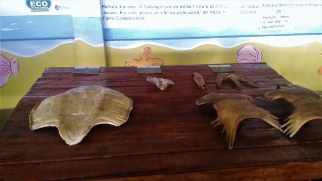 Ossos de tartaruga